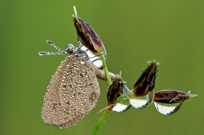 (A sleeping butterfly)