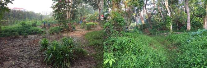 (A mini farm)